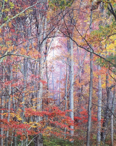 glowing autumn forest virginia by christopher burkett