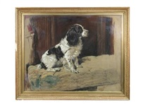study of a black-and-white english springer spaniel by cecil charles windsor aldin