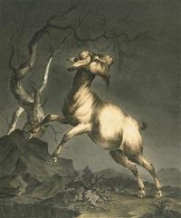 chèvre dans un paysage rocheux by remacle joseph laurenty