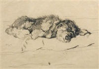 resting terrier by cecil charles windsor aldin