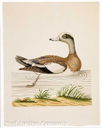 roan duck by john abbot