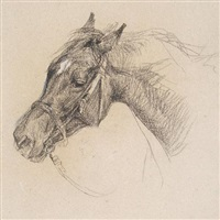head of a horse by lucy elizabeth kemp-welch