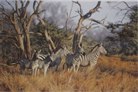 zebra by paul augustinus