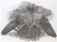 peregrine falcon by james renny