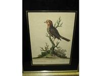birds, linaria, mexicana, capite flavo (+ la petit roffignoll de muraille; pair) by johann michael seligmann