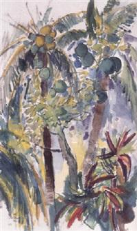 kokospalmen im sonnigen gegenlicht by ludwig miller