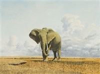 an african elephant by gerald coulson