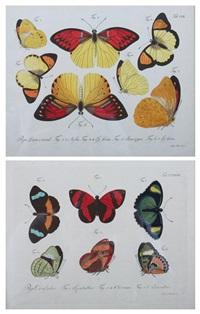 butterflies by carl gustav jablonsky