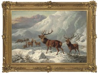 a stag and hinds in the highlands by byron webb