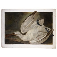 a dead spoonbill (+ the bird's head (study), verso) by jacob xavier vermoelen