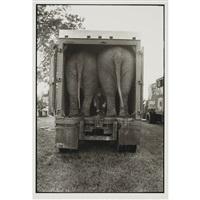 elephants by jill freedman