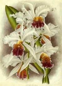orchids (suite of 6) by jean jules linden