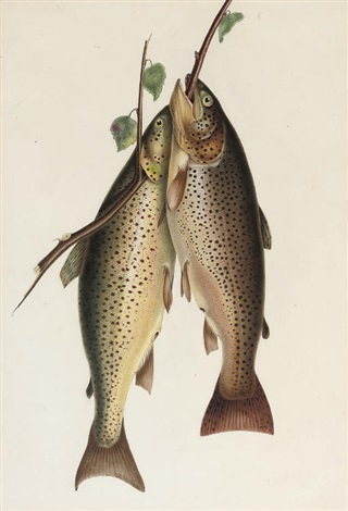 two brown trout by william sir jardine editor