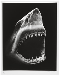 shark 5 by robert longo