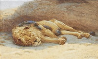 sleeping lion by john charles dollman