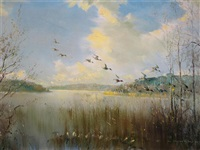 mallard in flight over sowley pond, new forest by vernon ward