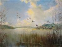 mallard in flight over sowley pond, new forest by vernon ward
