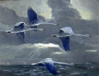 four swans flying in the twilight (+ a pencil and watercolour sketch of ducks, lrgr; 2 works) by peter markham scott