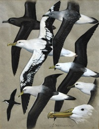 albatrosses (+ 2 others; 3 works) by keith shackleton