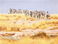 zebra in an open landscape by zakkie (zacharias) eloff