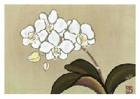 orchid by meiji hashimoto