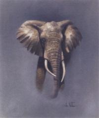 a bull elephant by ian nathan