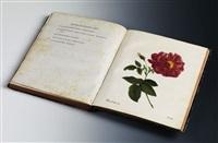 die rosen nach der natur (bk w/ 55 works, folio) by carl gottlob roessig