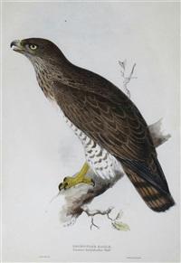 short toed eagle by edward lear