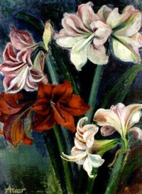 amaryllis by magda felicitas auer