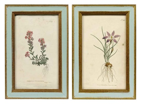 flowers (24 works) by william curtis