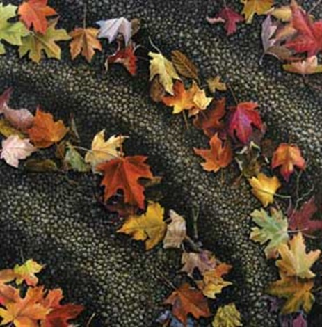 autumn leaves by poppy drews liem