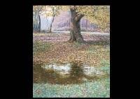 autumn (+ falling leaves; 2 works) by shin nishiyama