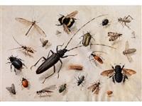 ansammlung von insekten by pieter holsteyn the elder