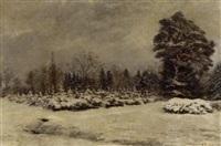 tannenschonung im winter by max correggio