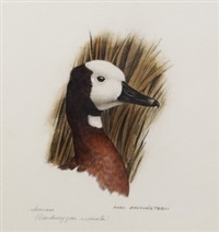 white-faced tree duck by axel amuchastegui