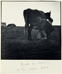 milk in evening in the open field (ireland) by dorothea lange