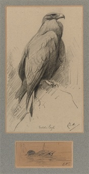 golden eagle and a mallard (study) by edwin john alexander