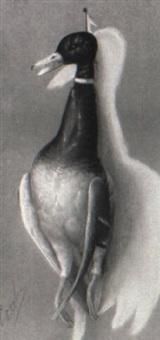 nature morte/mallard duck by george joseph amede coulon