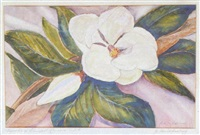 magnolia of shreveport, lousiana, u.s.a. by amos lee armstrong