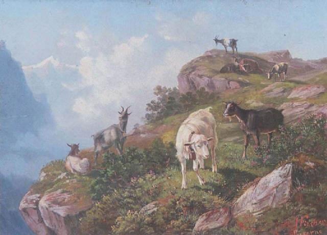 ziegen am felsigen hang im hochgebirge berner oberland by heinrich fischer