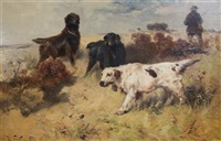 setters in the field by henry schouten