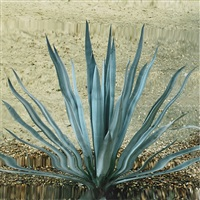 untitled (cactus 2) by anri sala