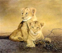 lion cubs by sally hynard