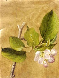 flowering apple branch (+ 24 others; 25 works) by emile-charles labbé