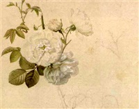 study of a white rose (+ 23 others; 24 works) by emile-charles labbé