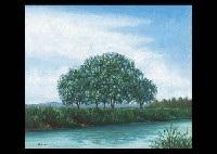 tree in the waterside by kan irie