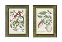 botanicals (12 works) by johann wilhelm weinmann