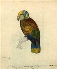 a pair of parrots (+ another, smlr; pair) by heinrich gottlieb reichenbach