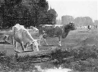 cows at waterhole by george glenn newell