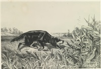 setter and quails by john woodhouse audubon